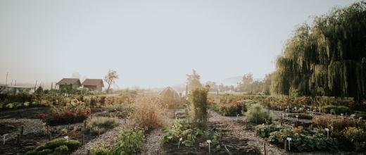 menihov-vrt